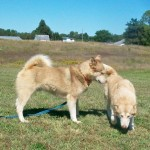 Ruby and Blaze her son from Jud 9-17-11