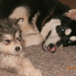 Meeka and one of Iceys pups.. She is such a sweet heart.