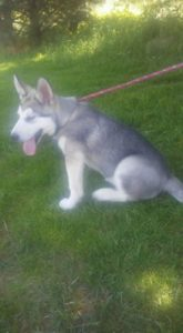 jd available 14 wks akc