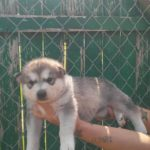 China 4 wks available 1000