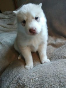 Blondi lighest female available