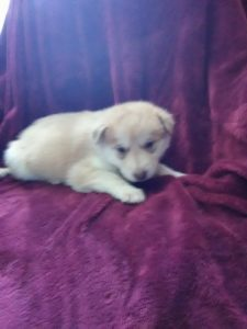 Reba available red female