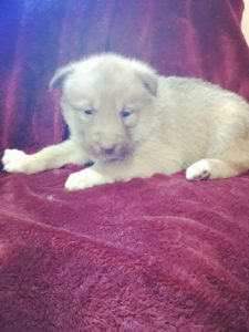 Zoey closed faces all red female 800 available